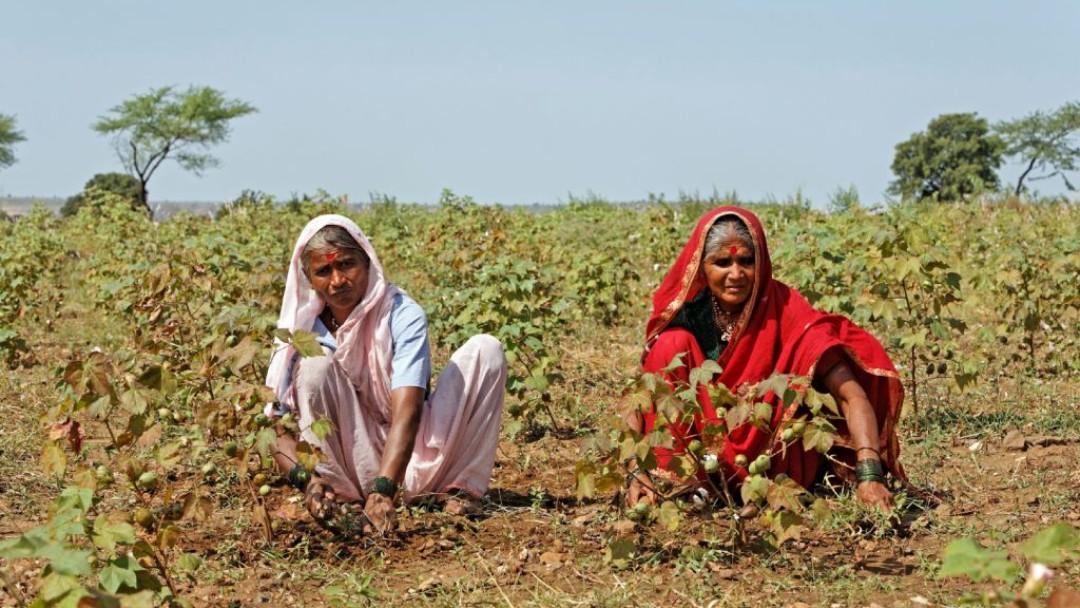 Zwei Frauen bei der Arbeit auf einem Baumwollfeld