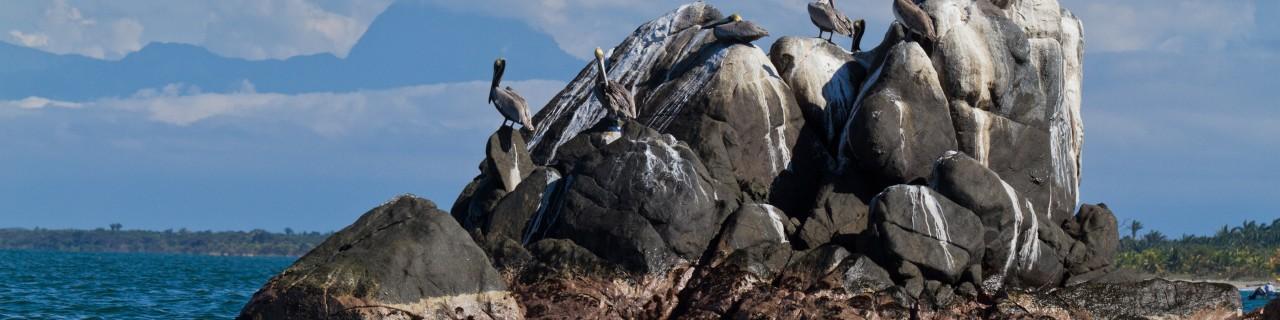 Pelicans on a rock in the ocean