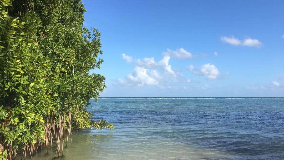 Mangroven in der Dominikanischen Republik