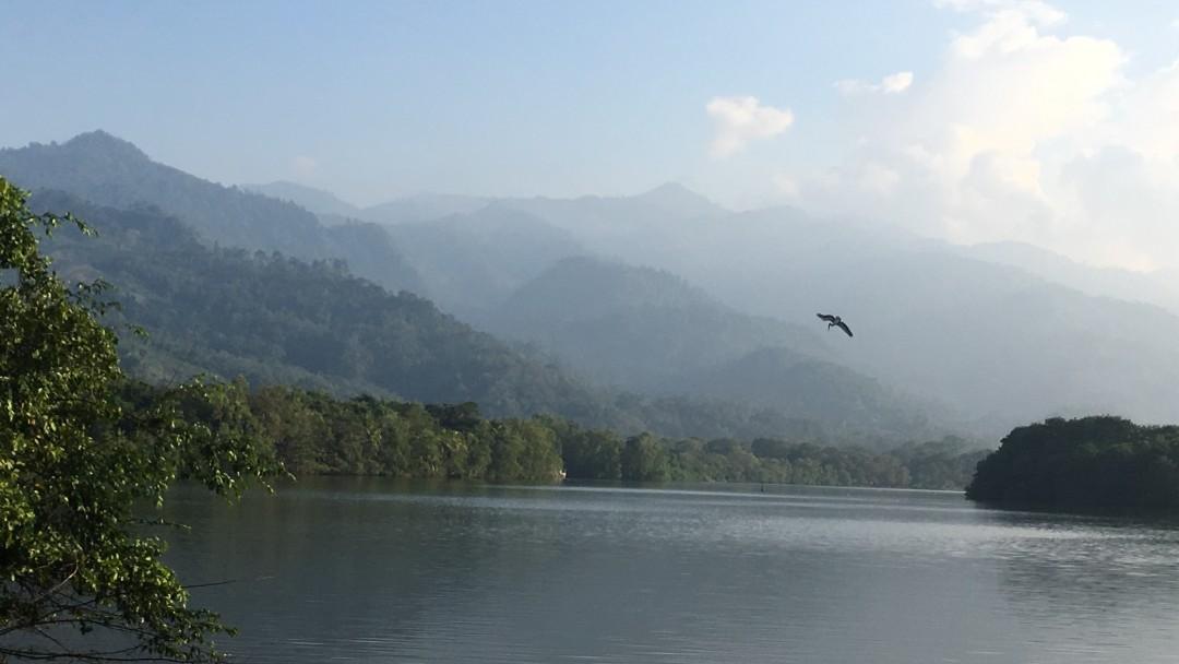 A bird flies through a nature conservation area in Honduras.