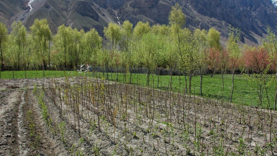 Feld in Tadschikistan