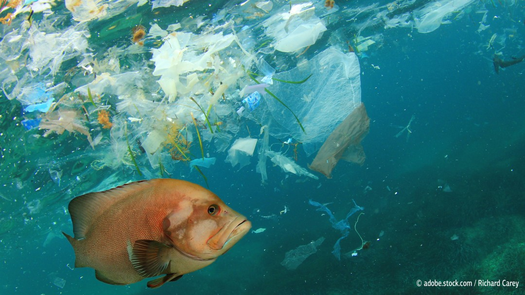A fish swims in the sea, around it plastic waste.