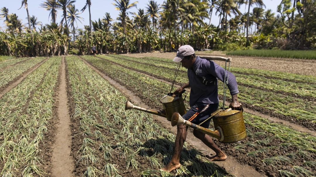 Ein Bauer mit zwei großen Gießannen in den Händern läuft vorsichtig über ein frisch besätes Feld.
