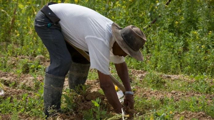 Farmworker at work
