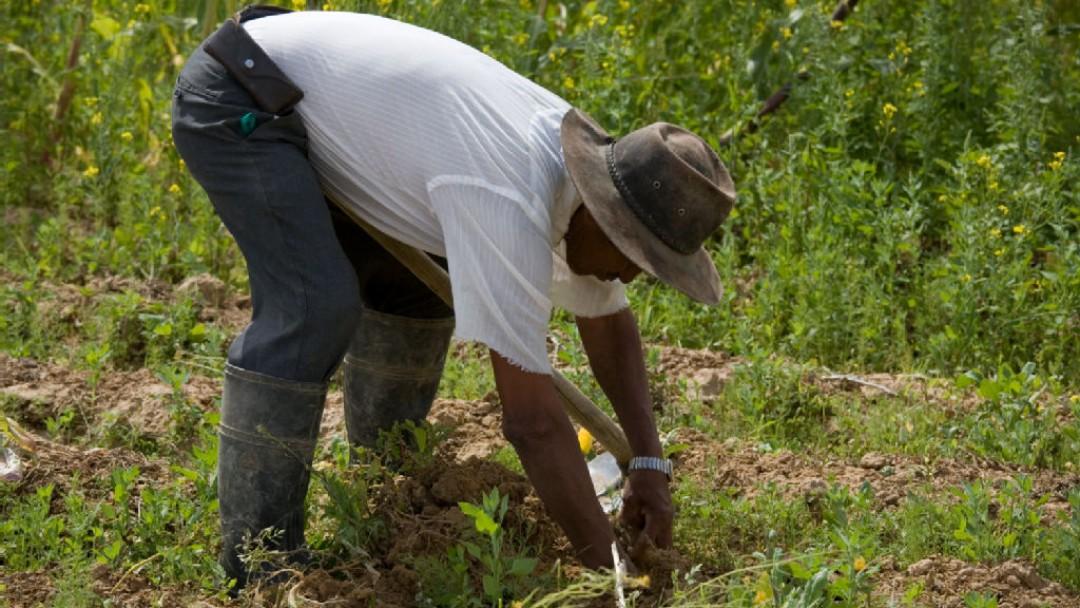 Ein Feldarbeiter beim Entfernen von Unkraut