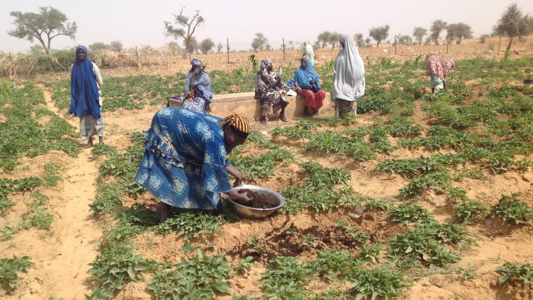 Frau bepfanzt einen kargen Acker, andere Frauen im Hintergrund sehen ihr dabei zu.