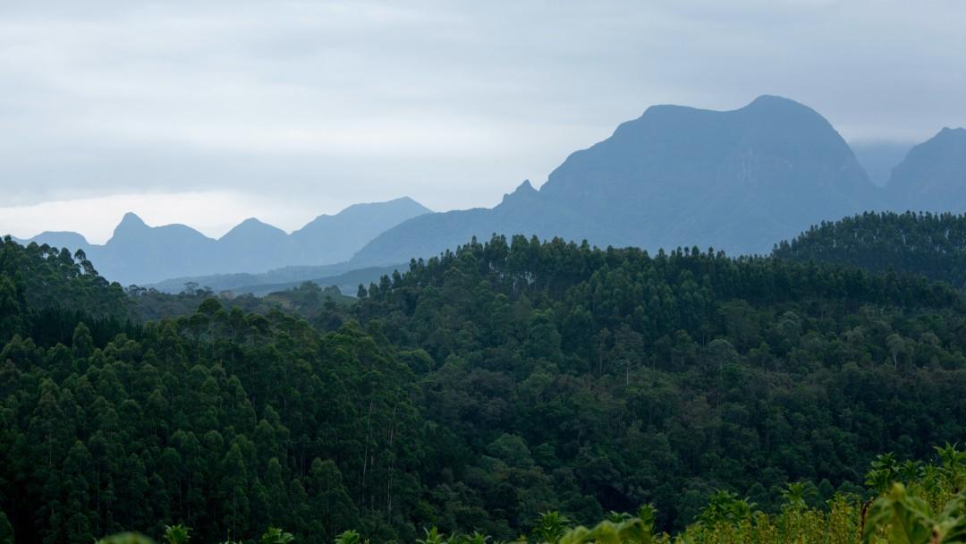 Großer, dichter und grüner Wald von oben. In der Ferne sind Berge zu erkennen.