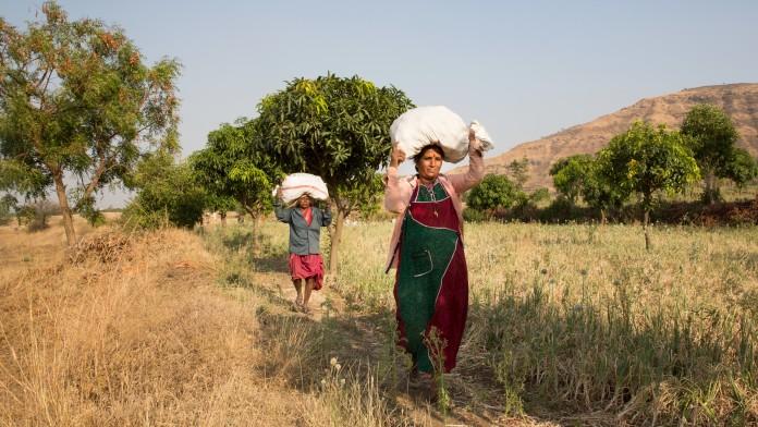 smallholders in India