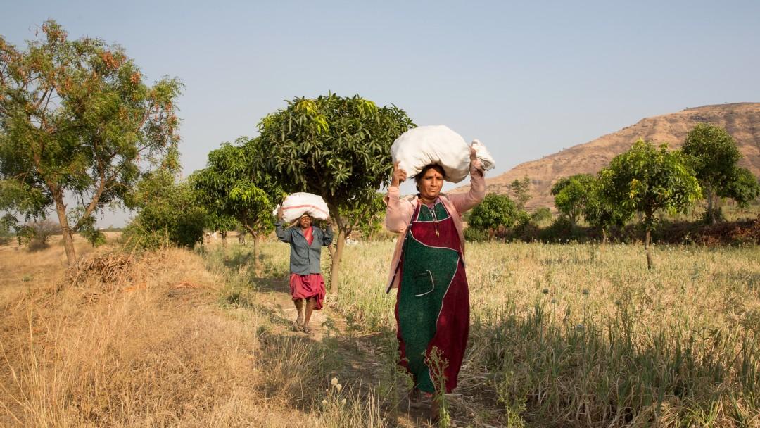 Indische Kleinbauern tragen Lebensmittelsäcke durch ein Feld