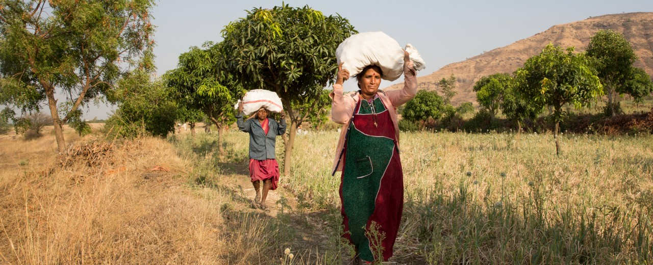 Indian smallholders are carrying food bags through a field