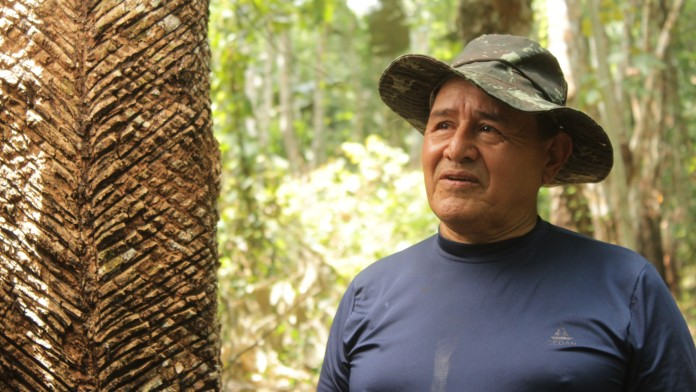 Man beside rubber tree