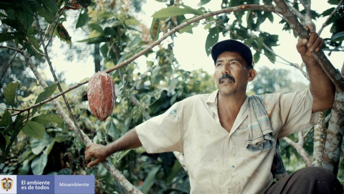Cacao farmer Don Albino in front of a cacao plant