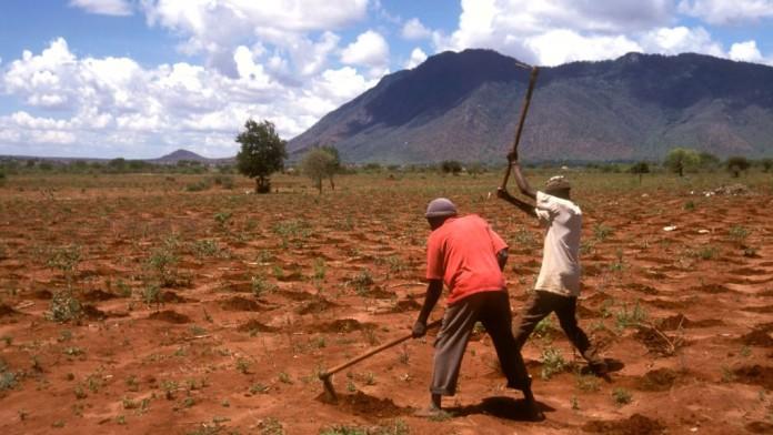 Zwei Männer bearbeiten einen trockenen Acker.