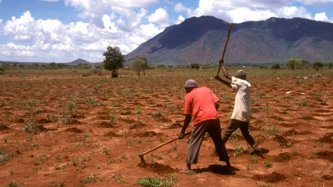 Two farmers cultivating a field.