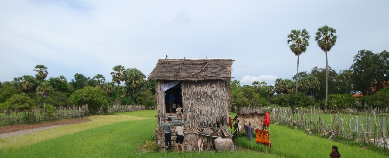 Rural housing in the middle of a rice field