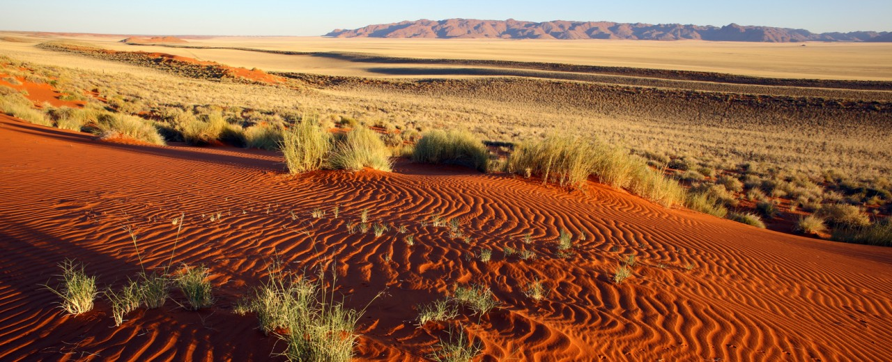 The image shows dunes of red desert sand with tufts of grass