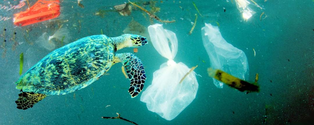 Schildkröte schwimmt im Meer umgeben von Plastikmüll
