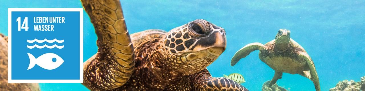 """Meeresschildkröte und SDG 14-Icon """"Leben unter Wasser"""""""