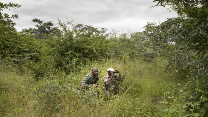 Rangers observing wildlife