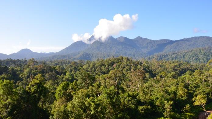 Wald in Indonesien