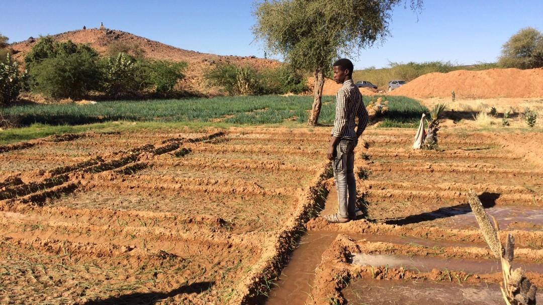 Bewässerungsparzellen in der Region Agadez