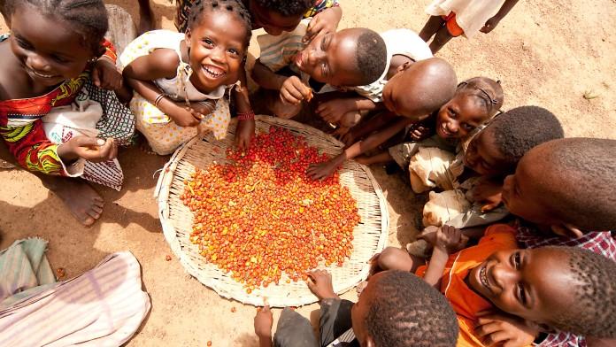 Afrikanische Kinder, die in eine große Schüssel mit Kakaobohnen greifen. Einige sehen glücklich in die Kamera.