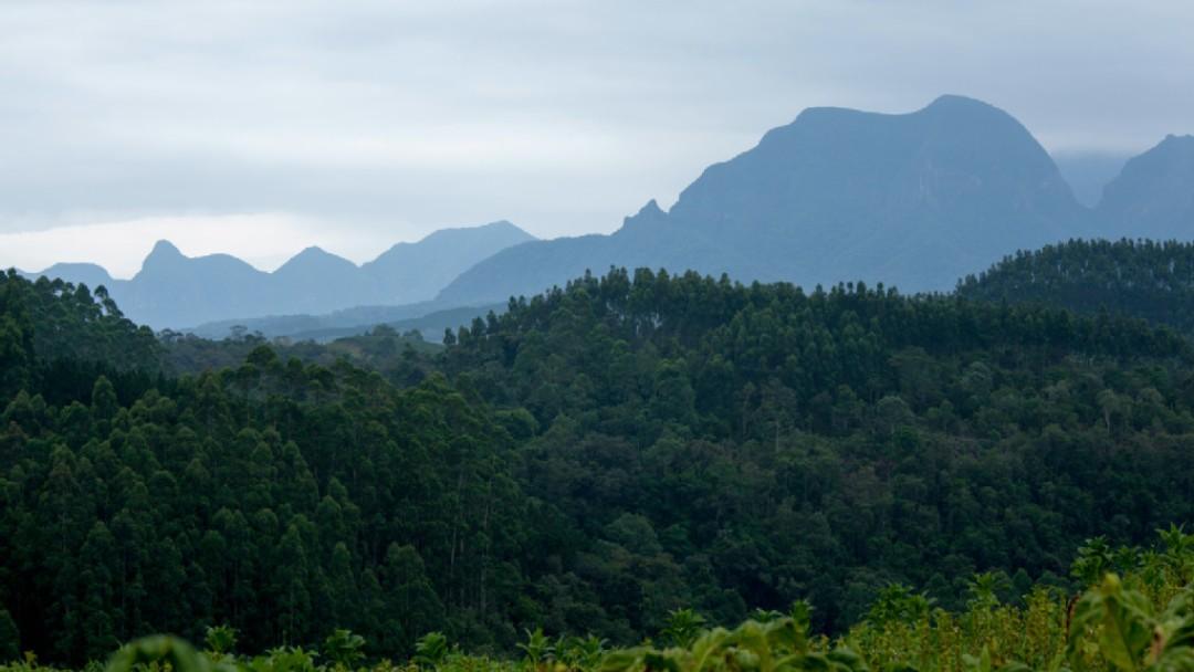 Nationalpark, grüne Waldfläche und im Hintergrund zeichnen sich die Berge ab