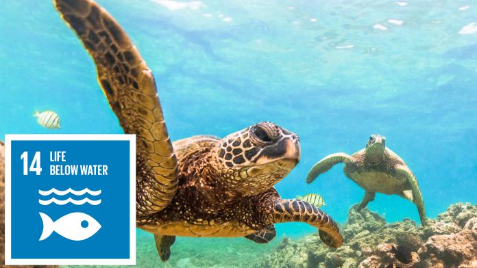 Wasserschlidkröten schwimmen im Meer, daneben: SDG 14-Icon: Leben unter Wasser