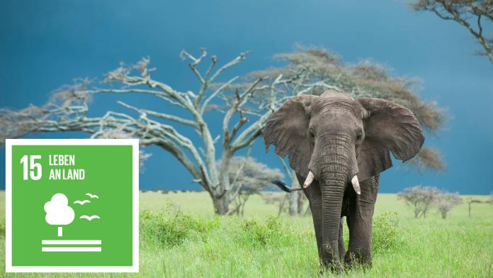Ein Elefant steht vor einem Baum. Links ist das Icon von SDG 15: Leben an Land