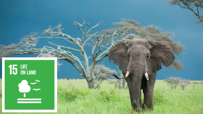 An elephant in front of a tree, next to that the SDG 15 icon: Life on land